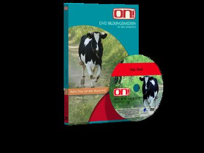 DVD Das Rind